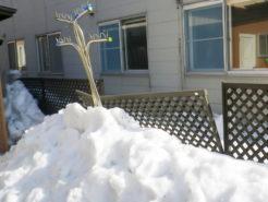 隣アパートからの落雪被害